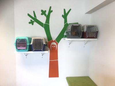 Katten-in-kattenboom-wachtkamer